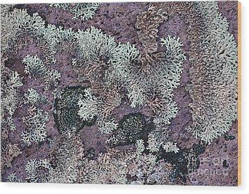 Lichen Pattern Series - 57 Wood Print by Heiko Koehrer-Wagner