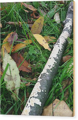 Lichen Recycling Wood Print by Trish Hale