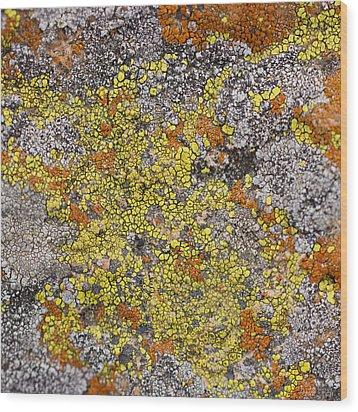 Lichens Wood Print by Heidi Smith
