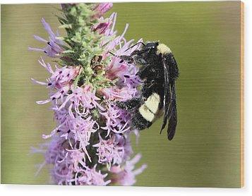 Life Of A Bee Wood Print by Laura Oakman