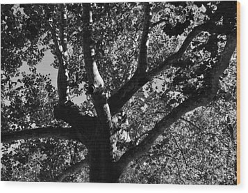 Wood Print featuring the photograph Light And Dark by Brian Hughes