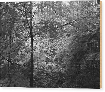 Wood Print featuring the photograph Light In The Woods by Kathleen Grace