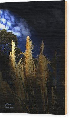 Wood Print featuring the photograph Light Of Hope by Itzhak Richter