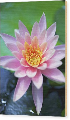 Light Pink Water Lily Wood Print by Kicka Witte