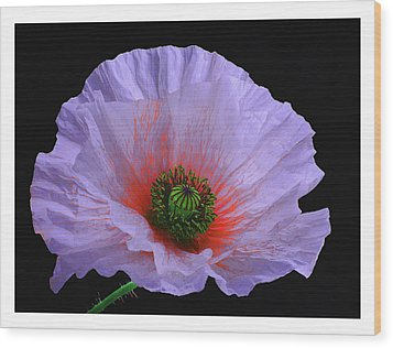 Lilac Poppy Wood Print by A. McKinnon Photography
