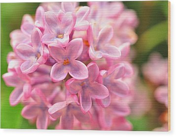 Wood Print featuring the photograph Lilac  by Puzzles Shum