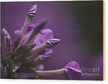 Wood Print featuring the photograph Lilac Spirals. by Clare Bambers