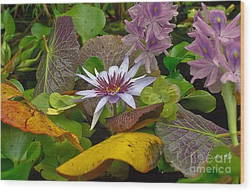 Wood Print featuring the photograph Lilies No. 35 by Anne Klar