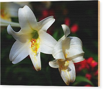 Lilium Longiflorum Flower Wood Print by Paul Ge