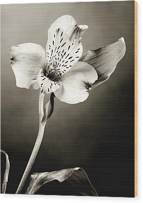 Lilly Flower B And W Wood Print by M K  Miller