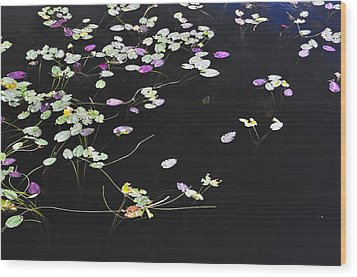 Lilly Pads Wood Print by Andres LaBrada