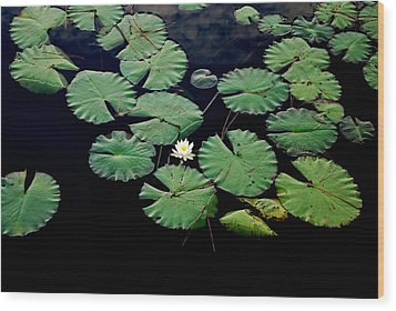 Lily Alone Wood Print by May Photography