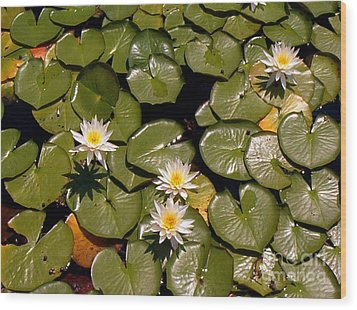 Wood Print featuring the painting Lily Blooms by Gretchen Allen