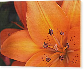 Wood Print featuring the photograph Lily Lily by Bob Whitt