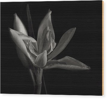 Lily Wood Print by Mario Celzner