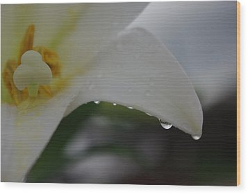 Lily Of Tears Wood Print by Robyn Stacey