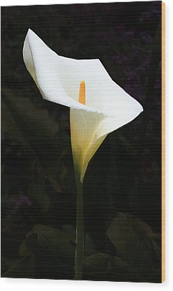 Wood Print featuring the photograph Lily On Black by Nareeta Martin