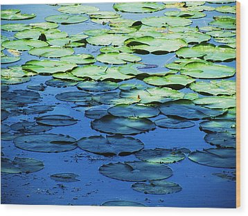 Lily Pads -one Wood Print by Todd Sherlock