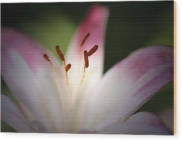 Wood Print featuring the photograph Lily by Renee Hardison
