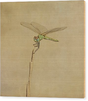 Lime Green Dragonfly Wood Print by Paul Grand Image