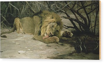 Lion Reclining In A Landscape Wood Print by Wilhelm Kuhnert