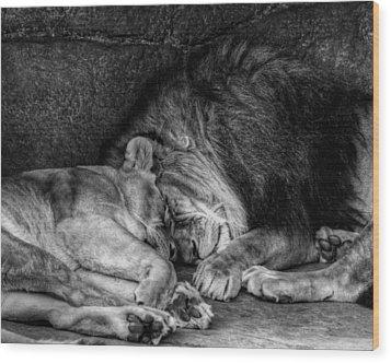 Lions Sleep Tonight Wood Print