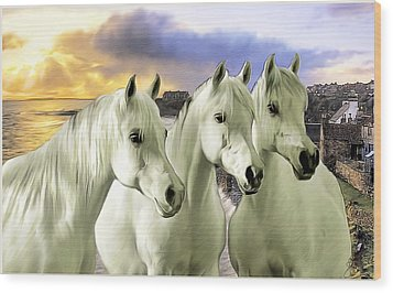 Lipizzans Wood Print by Tom Schmidt