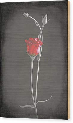 Lisianthus Wood Print by Fiona Messenger