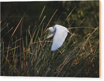 Wood Print featuring the photograph Little Blue Heron Before The Change To Blue by Steven Sparks