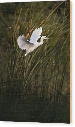 Wood Print featuring the photograph Little Blue Heron On Approach by Steven Sparks
