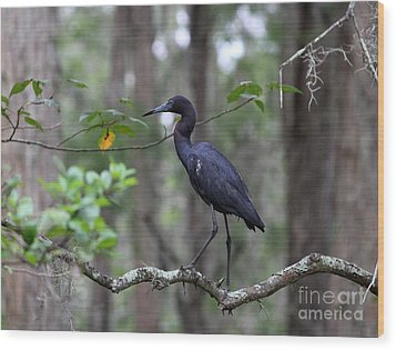 Little Blue Heron Wood Print by Theresa Willingham