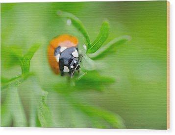 Little Climbing Lady Bug Wood Print