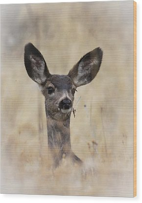 Wood Print featuring the photograph Little Fawn by Steve McKinzie