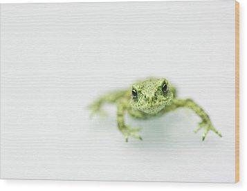Little Frog Wood Print by Erik van Hannen