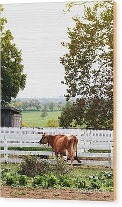 Little Jersey Cow Wood Print by Stephanie Frey