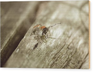 Wood Print featuring the photograph Little Jumper In Sepia by JD Grimes
