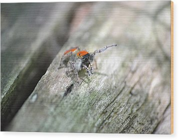 Wood Print featuring the photograph Little Jumper by JD Grimes