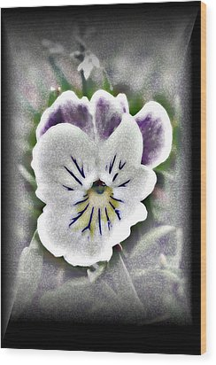 Little Pansy Wood Print by Karen Harrison