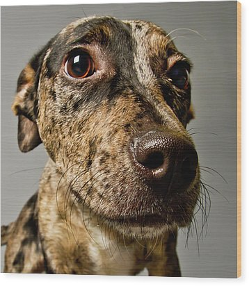 Little Pup Wood Print by Square Dog Photography