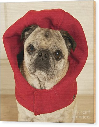 Little Red Riding Pug Wood Print by Cindy Lee Longhini