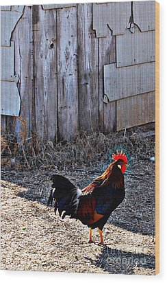 Little Red Rooster Wood Print