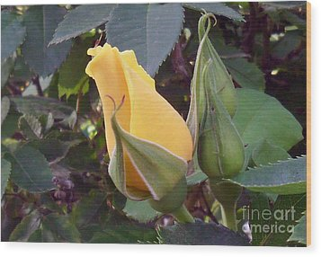 Little Rose Bud Saying Prayers Wood Print by Doris Blessington