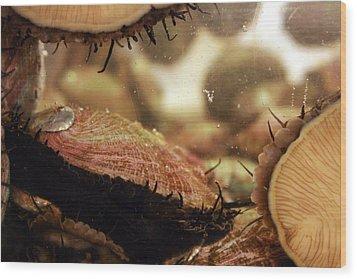 Live Abalone  The Shell Wood Print by Jennifer Bright