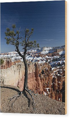 Wood Print featuring the photograph Living On The Edge by Karen Lee Ensley