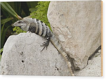 Lizard Wood Print by Blink Images
