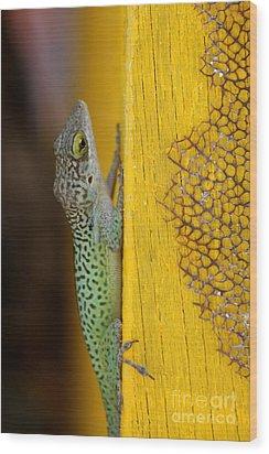 Lizard Wood Print by Sophie Vigneault