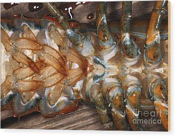 Lobster Female Sex Organs Wood Print by Ted Kinsman