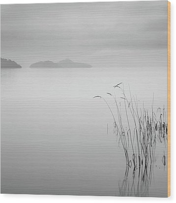 Loch Lomond Grass Wood Print by Billy Currie Photography