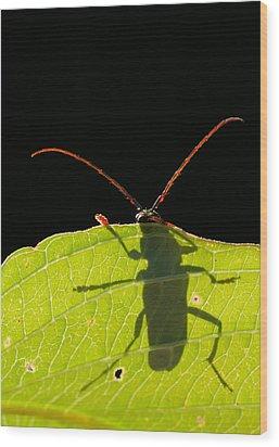 Locust Borer Wood Print by Mircea Costina Photography