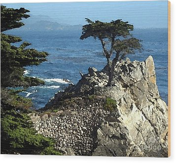 Lone Cypress Tree Wood Print